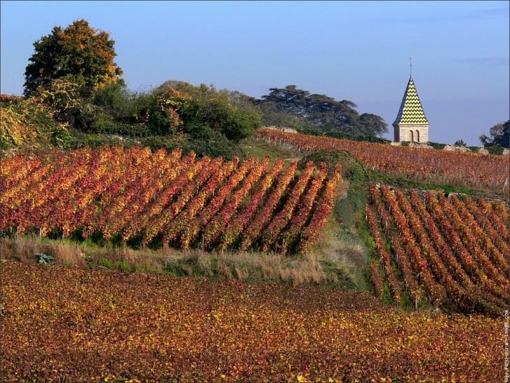 CNV et Côtes de Beaune